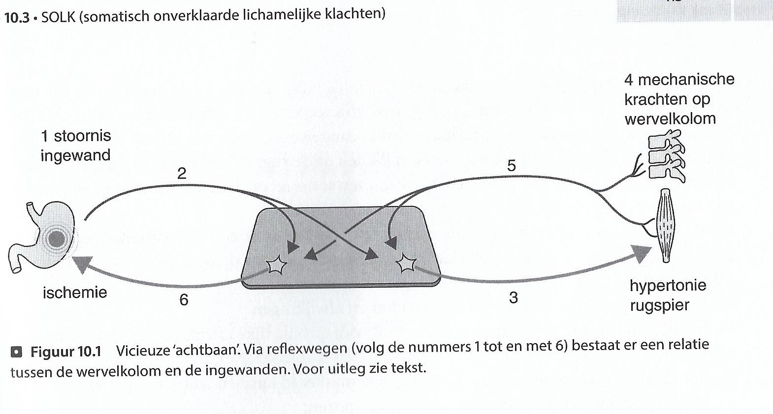 Kopie Boek: Segmentale verschijnselen. Ben van Cranenburgh. ISBN 978 90 368 0965 8